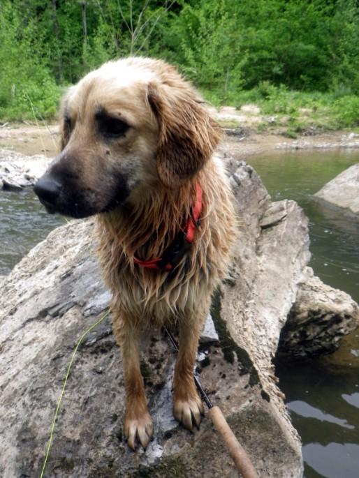 dogrock