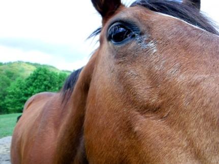 hamPTON-horse
